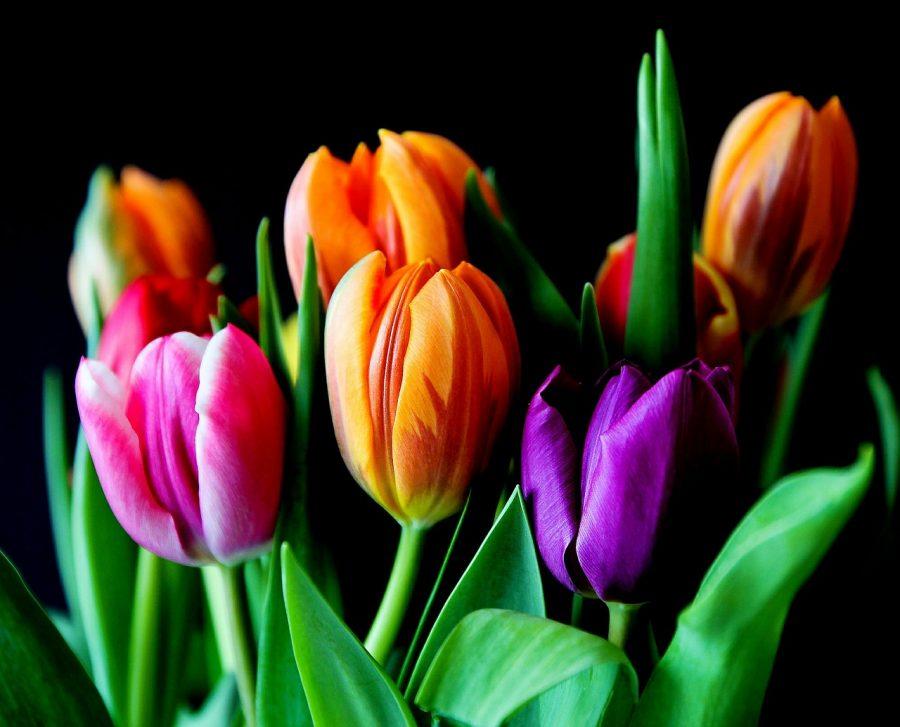 Kwiaty Na Dzien Kobiet 2019 Ktore Wybrac Domowy Duszek Pl
